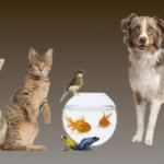 """Bienvenue sur le blog ! et Noms de chiens/chats en """"O"""" pour 2018 (France)"""