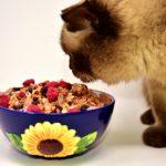 Où trouver les meilleurs aliments préparés pour vos animaux ?