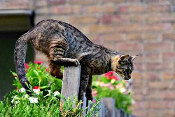 Ne perdez plus vos animaux (chien et chat) grâce à Weenect !