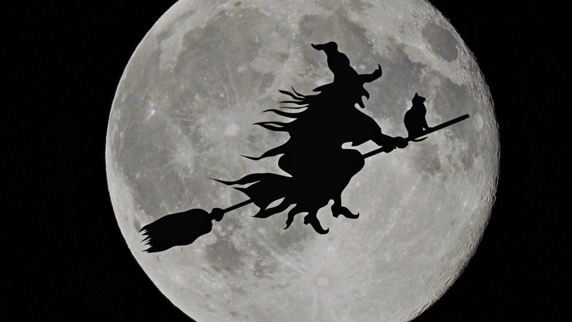 Bientôt Halloween à fêter avec vos animaux !