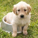 Des produits sains et bio pour vos animaux