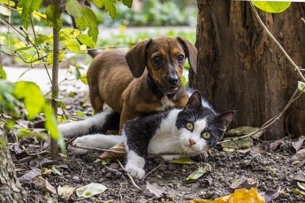 Bons plans pour vos animaux – Décembre 2019