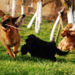 Six races de chiens très appréciées par les Français