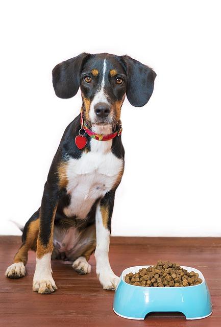 Nourriture déshydratée pour chien, croquettes