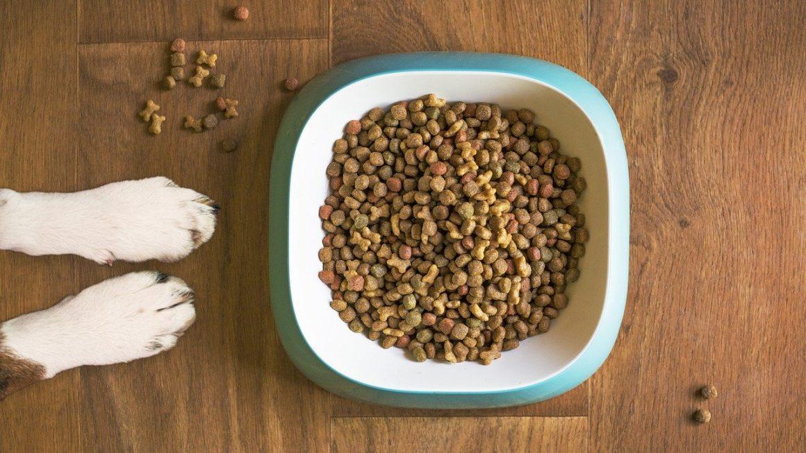 La nourriture déshydratée pour chien : est-ce vraiment bon ?