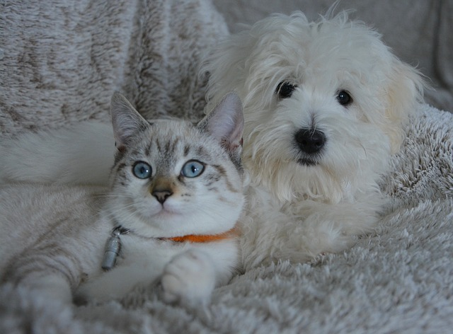 Chien ou Chat ? Quel animal de compagnie choisir ?