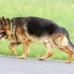 Traceur GPS pour chien et chat - Le moyen idéal pour les protéger