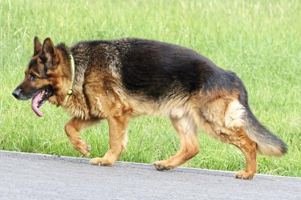 Traceur GPS pour chien et chat – Le moyen idéal pour les protéger