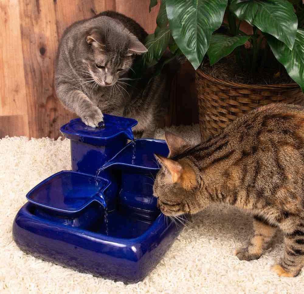 Fontaine à eau pour chats Miaustore - Blue