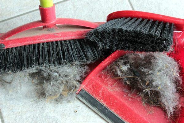 Comment se débarrasser efficacement des poils d'animaux ?
