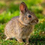 Et pourquoi pas adopter un lapin ?