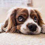 Les meilleurs conseils pour votre chien (partie 2)