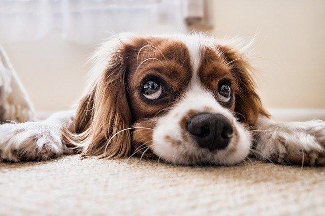 Les meilleurs conseils pour votre chien (partie 3)