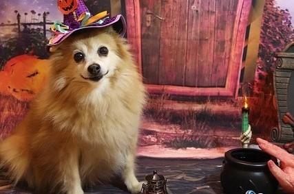 C'est bientôt Halloween ! Faites la fête avec vos animaux