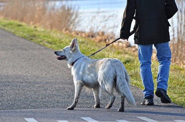 Quelle longueur de laisse pour un chien ?