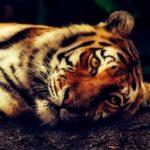 Animaux en danger d'extinction