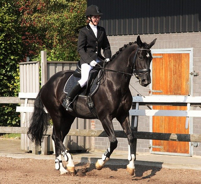 L'art du dressage des chevaux