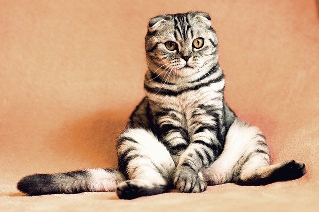 Faits incroyables que vous ne connaissez pas sur les chats