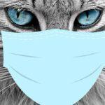 Faut-il prendre une assurance santé pour son animal ?