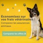 Assurances santé pour animaux : comment les comparer ?