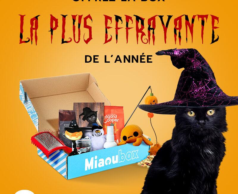 Box-surprise d'Halloween pour chien et chat