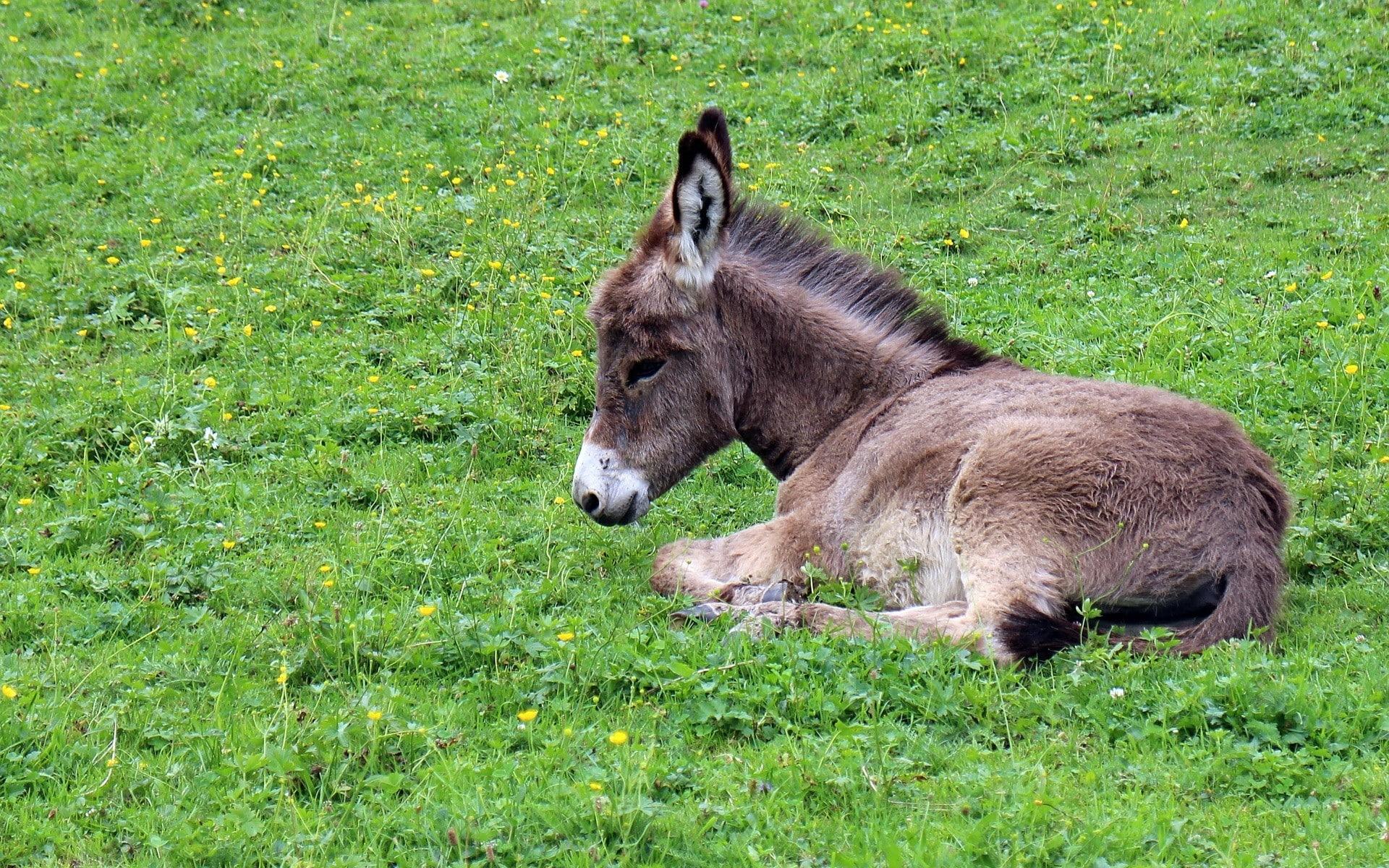 Fonds d 39 cran animaux de ferme gratuits - Images d animaux sauvages gratuites ...