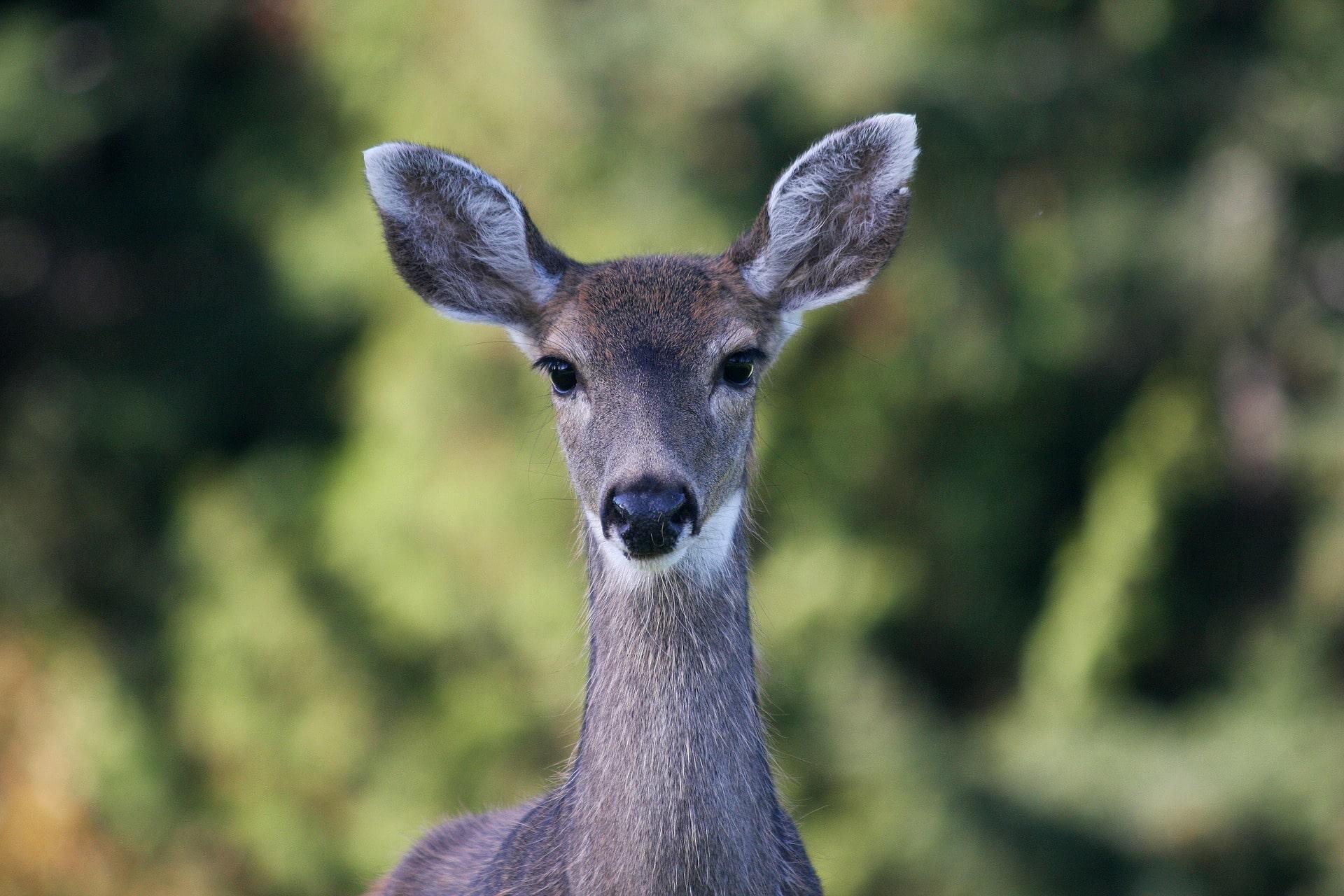 foto de Fonds d'écran Animaux de forêt gratuits