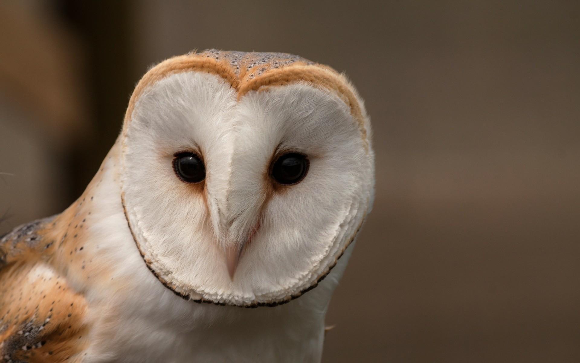 Fonds d 39 cran oiseaux gratuits - Image de chouette gratuite ...