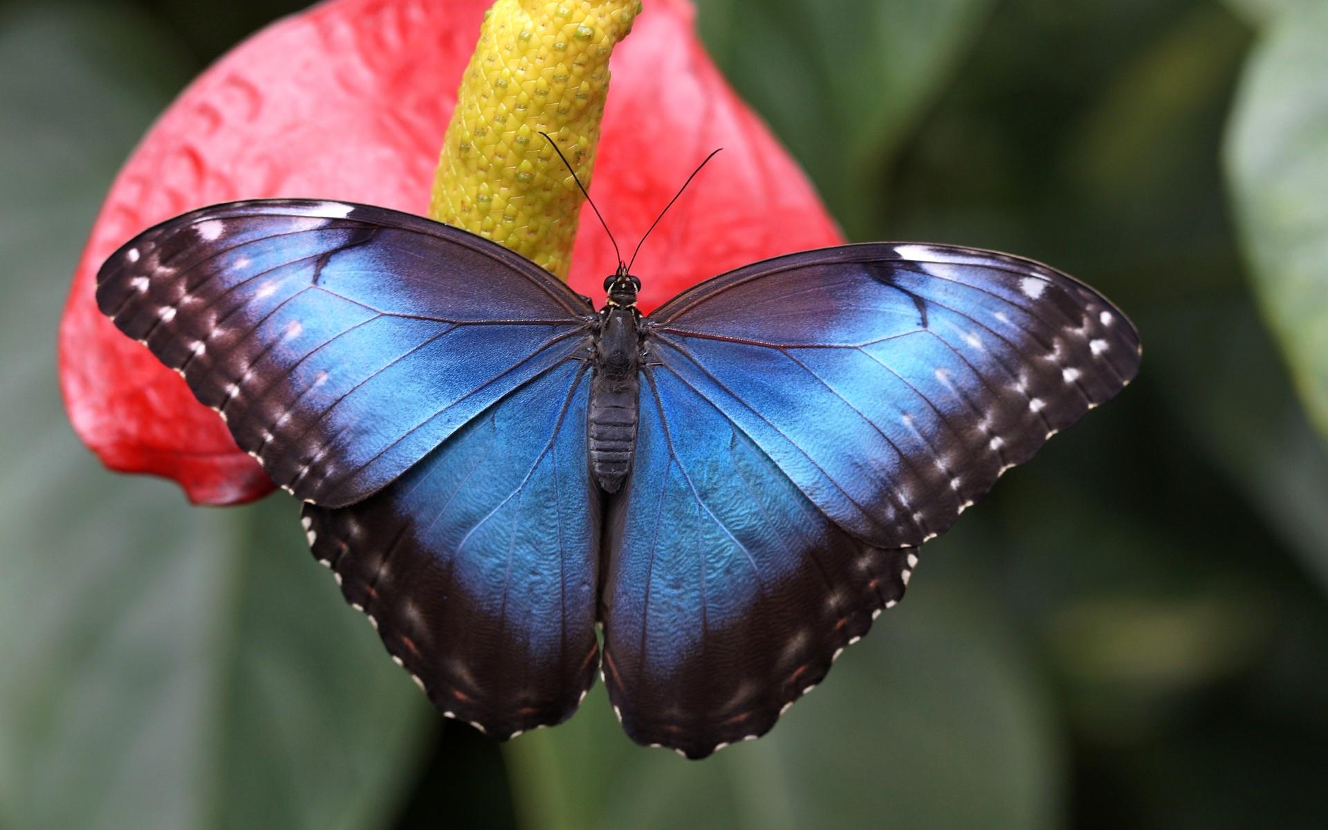 Fonds d 39 cran papillons gratuits - Image papillon gratuit ...