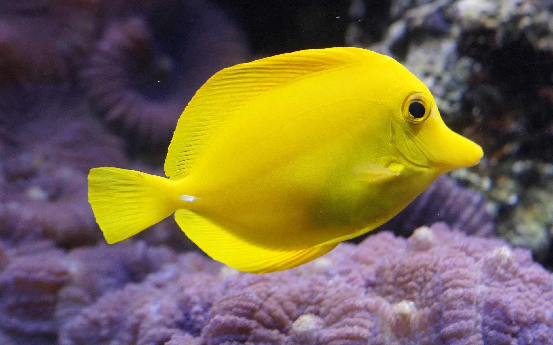 Fonds d 39 cran aquarium poissons gratuits - Poisson image ...