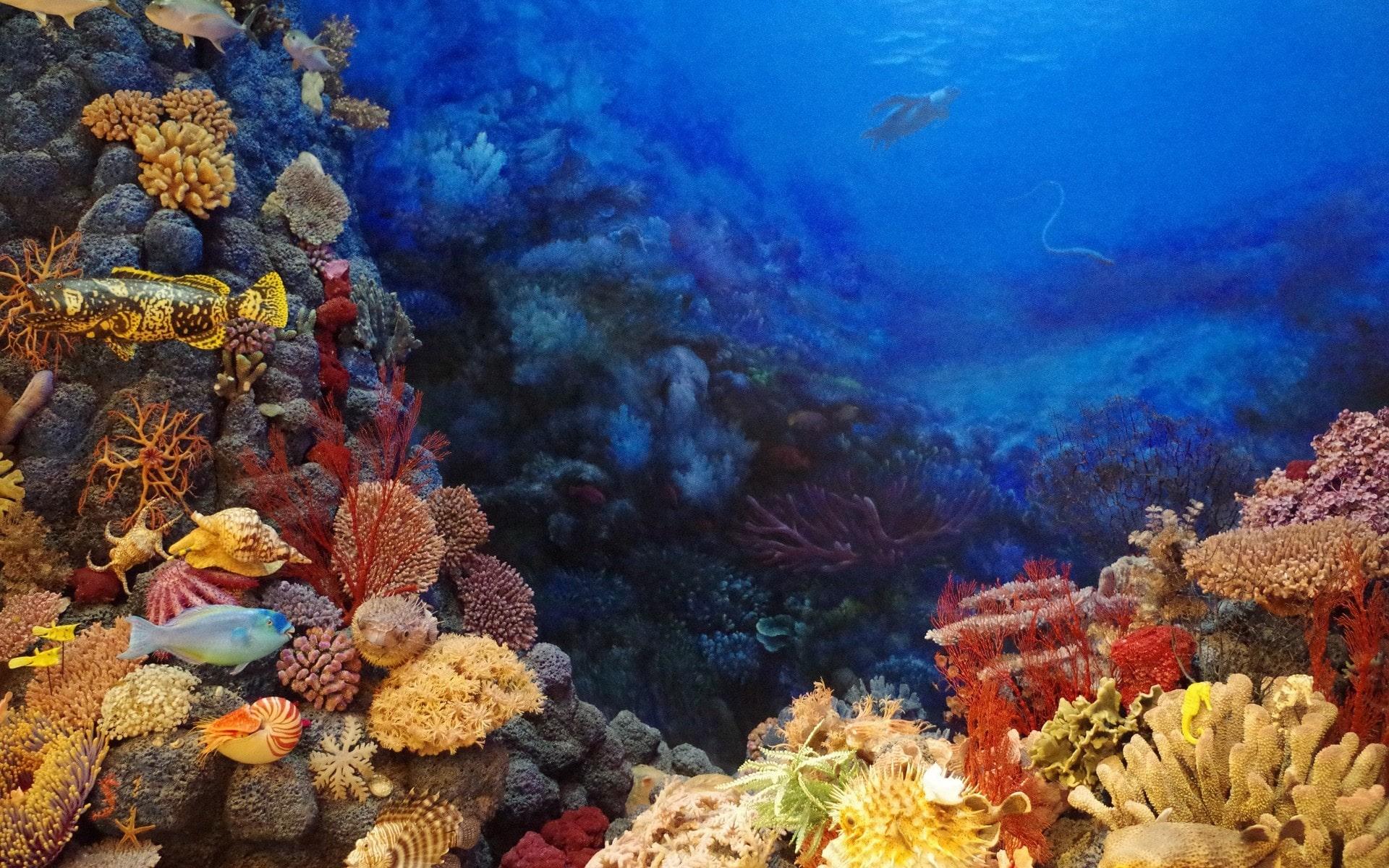 https://www.clubic.com/telecharger-fiche212916-sim-aquarium-2.html