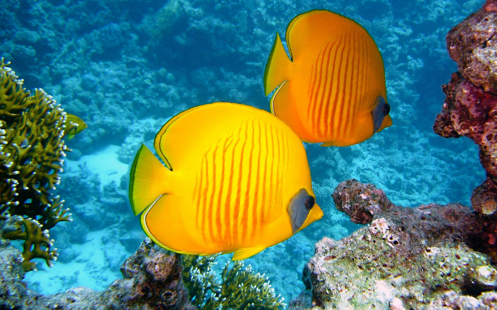 Fonds d 39 cran aquarium poissons gratuits for Fond ecran aquarium
