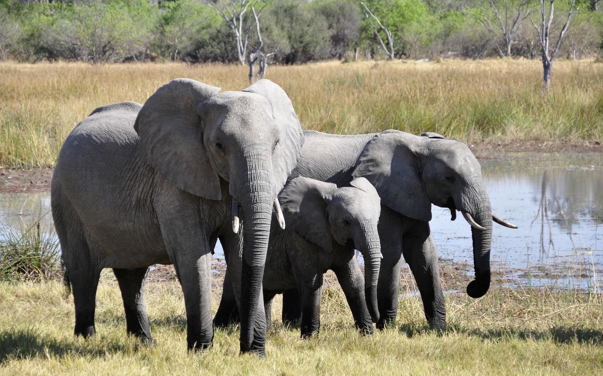 foto de Fonds d'écran Animaux sauvages gratuits