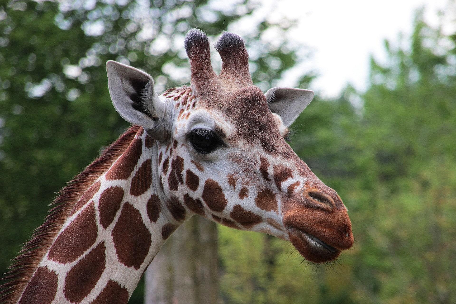 Image D Animaux Pour Fond D Écran fonds d'écran animaux sauvages gratuits