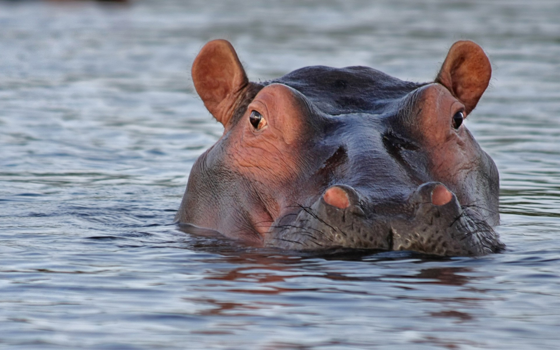 Fonds d 39 cran animaux sauvages gratuits for Image fond ecran animaux