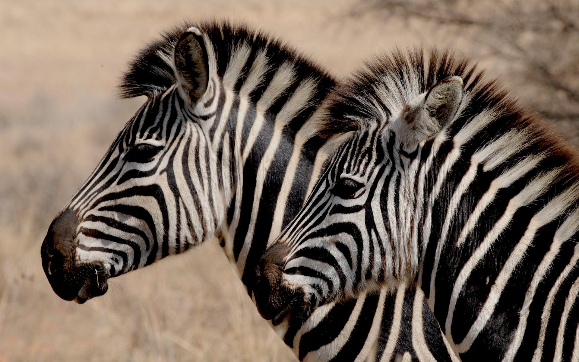 Fonds d 39 cran animaux sauvages gratuits - Images d animaux sauvages gratuites ...
