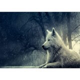 Poster Affiche Animaux Loup blanc