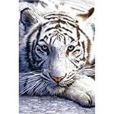 Poster Affiche Animaux Tigre blanc