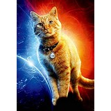 Poster Affiche Animaux Chat Captain Marvel