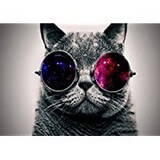 Poster Affiche Animaux Chat Chartreux Lunettes