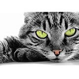 Poster Affiche Animaux Chat tigré Yeux verts