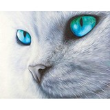 Poster Affiche Animaux Chat Yeux etincelants