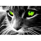 Poster Affiche Animaux Chat yeux verts