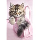 Poster Affiche Animaux rigolos Chaton Sac rose