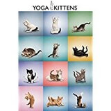 Poster Affiche Animaux Chatons Yoga