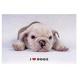 Poster Affiche Animaux Chien Bouledogue