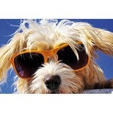 Poster Affiche Animaux Chien Lunettes