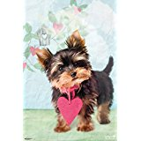 Poster Affiche Animaux Chien Yorkshire Coeur rose