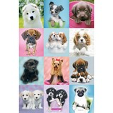 Poster Affiche Animaux Chiens Chiots Calins