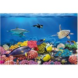 Poster Affiche Animaux Dauphins Poissons Tortues